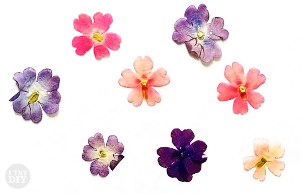 Don t these pressed flowers look watercolored i try diy